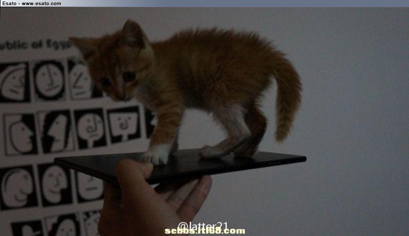 Sony Xperia ZU Togari Phablet filtrada