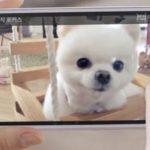 Anuncio de LG G Pro 2 muestra función Magic Focus