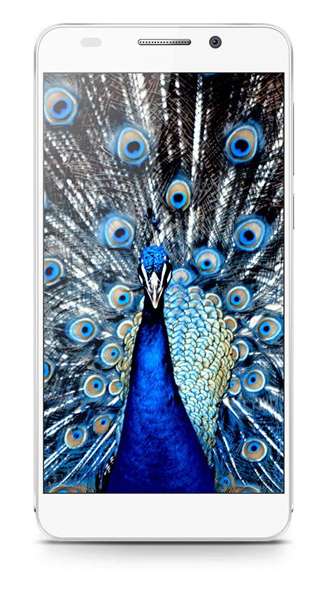 Huawei Honor 6 color blanco pantalla