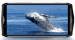 Ulefone Power 5 pantalla